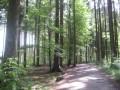 Bergtierpark_Wald