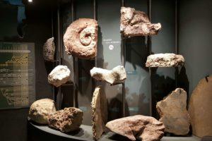 fossilien-zum-anfassen-im-mammutmuseum-siegsdorf