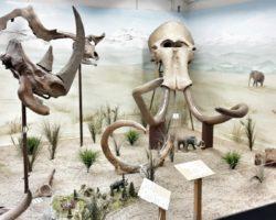 Ausstellung im Urzeitmuseum in Taufkirchen