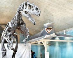 Dino im Urzeitmuseum