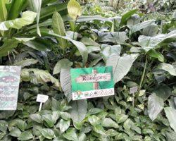 Ein weiteres Highlight auf der Insel Mainau_Die Schmetterlingsausstellung