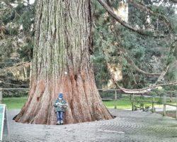 Entspannt am Mammutbaum liegen und im BRIO-Heft blättern.