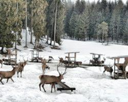 Bei der Wildtierfütterung in Garmisch.