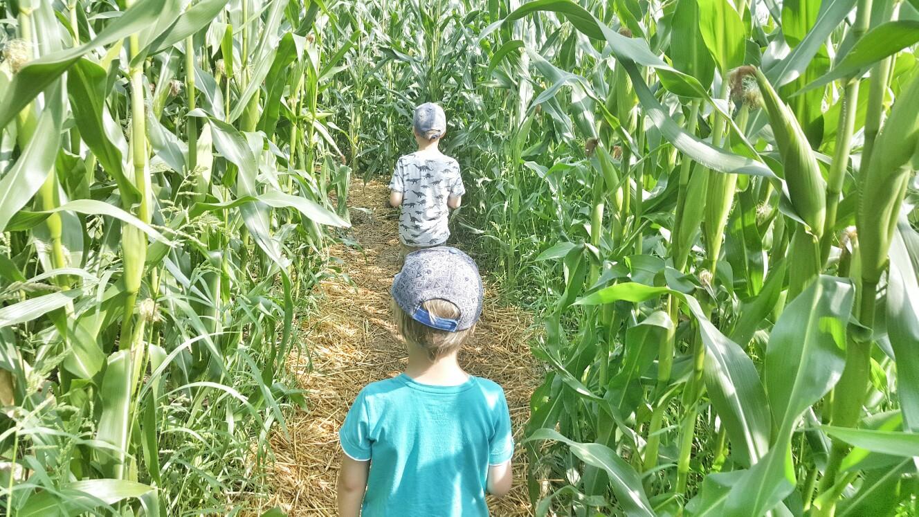 Maislabyrinth Oderding