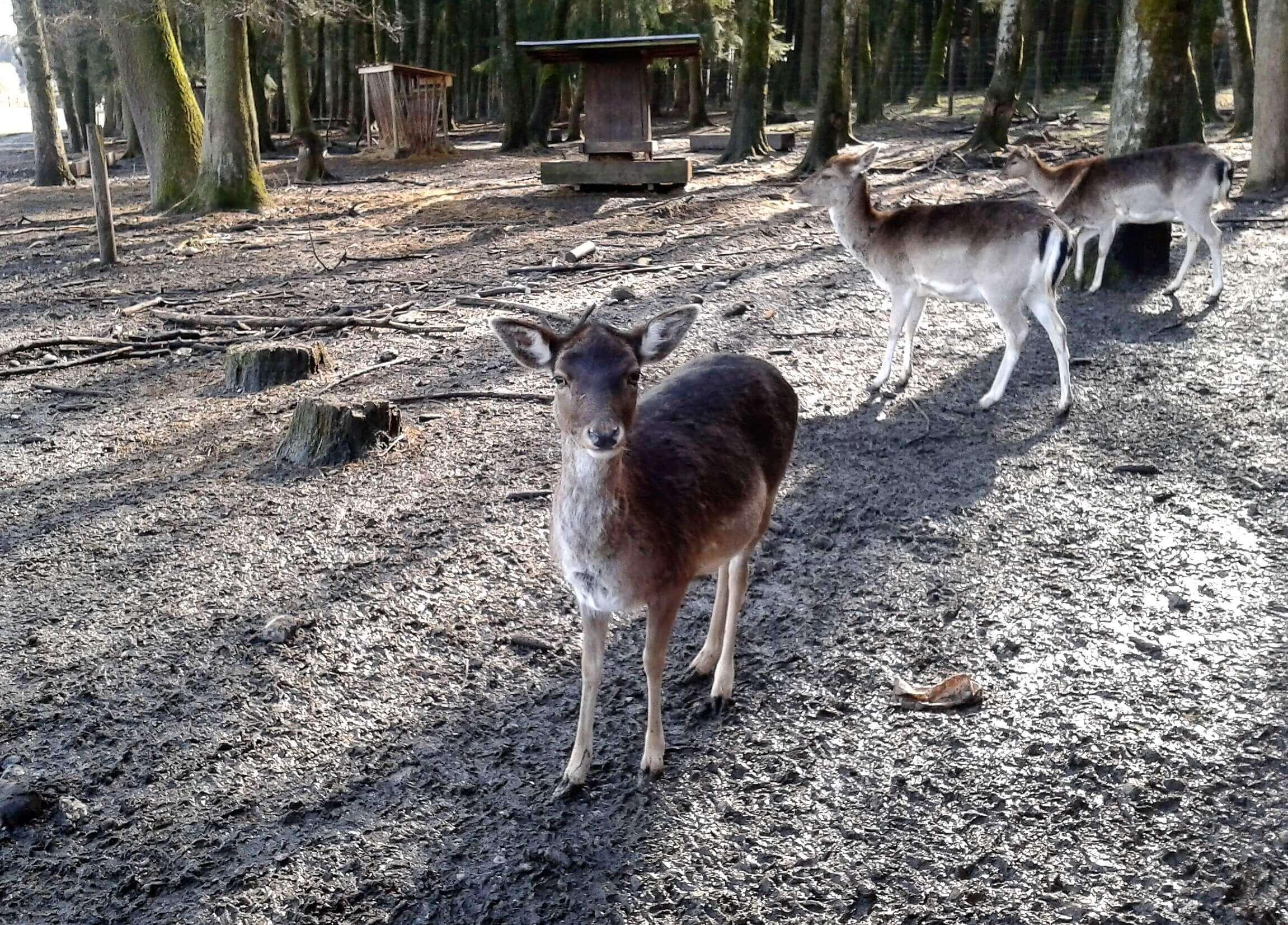Ausflugsziele Bayern Herbst - Wildpark Poing
