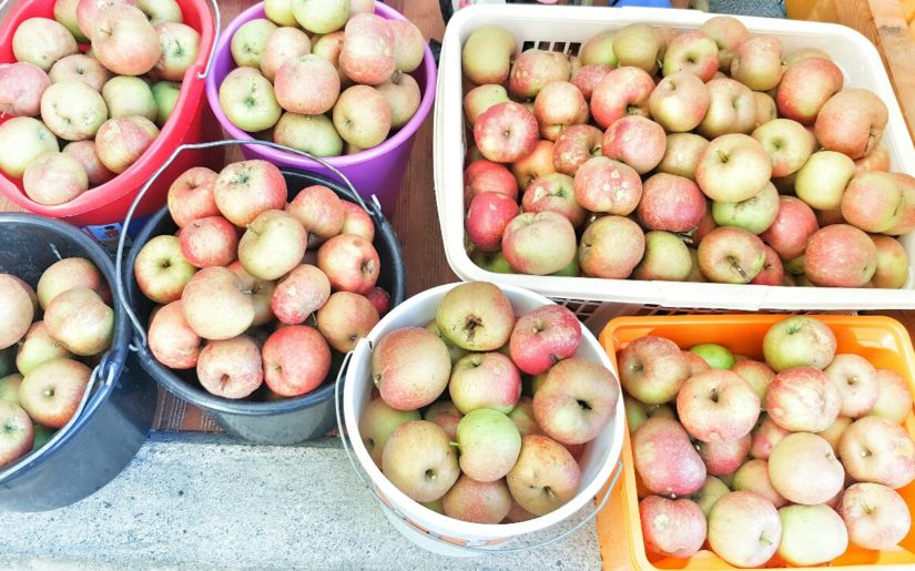 Was kann man aus Äpfeln machen
