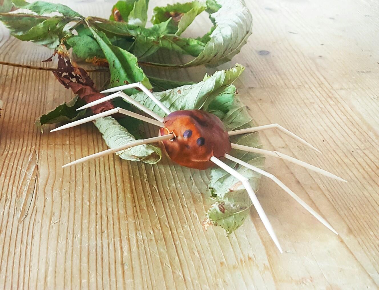 Kastanien-Spinne:  Basteln mit Kastanien